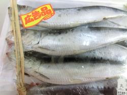 今年一発目の魚の日!